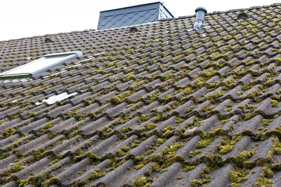 What is the Green Stuff Growing on My Roof