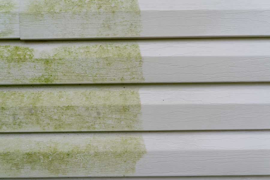 What is the Difference Between Algae and Mold